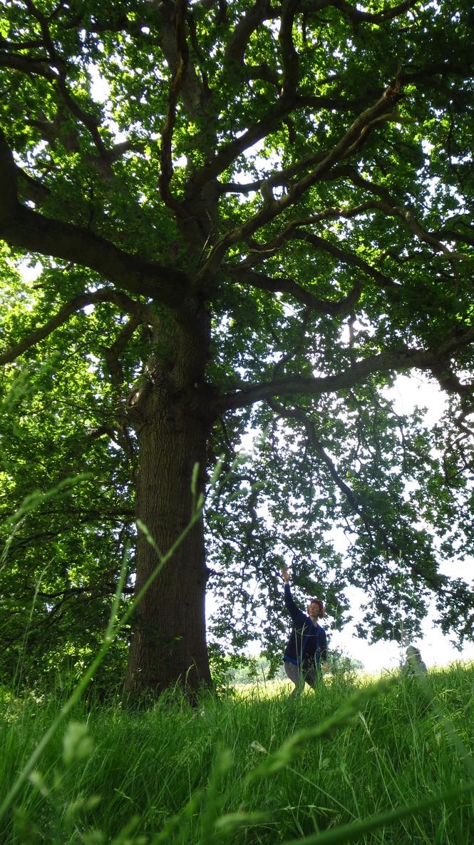 woman under an oak tree