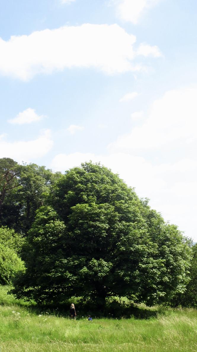 small figure under a giant oak tree